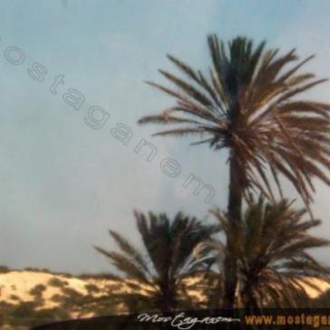 Photo mostaganem_20040805_0006