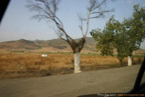Photo Sur la route d'Alger-2588