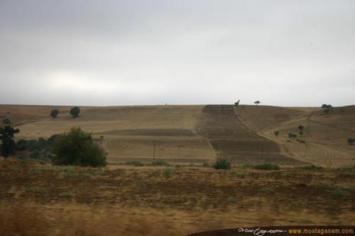 Photo Sur la route d'Alger-2598