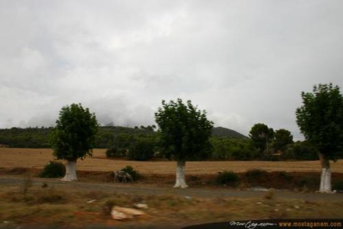 Photo Sur la route d'Alger-2607