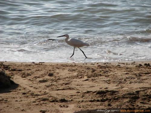 Photo oiseau-2658